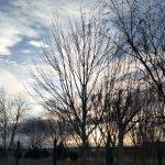 树丛后的太阳