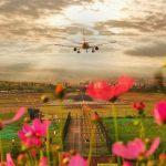 △2018年6月,#成都新网红打卡地# 云华新村,拍的好不如P得好。开满格桑花的小山坡,静候着每一趟班机的归来,却渐凋零。